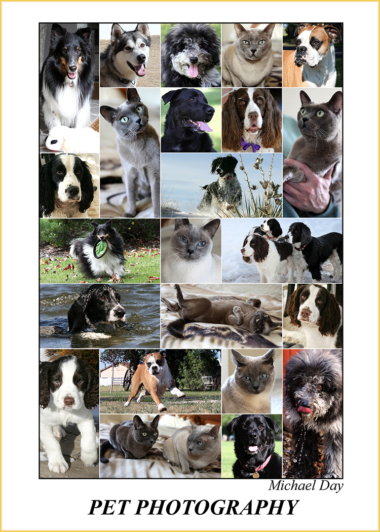 PetPhotographyPoster(7x5,150rr)