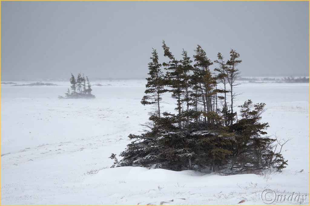 1DX1784StuntedTrees(7.5x5,cpywrt,150rr)