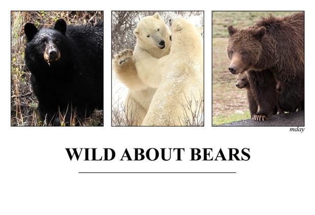 9.WildAboutBears3(7.5x5.1,150rr)