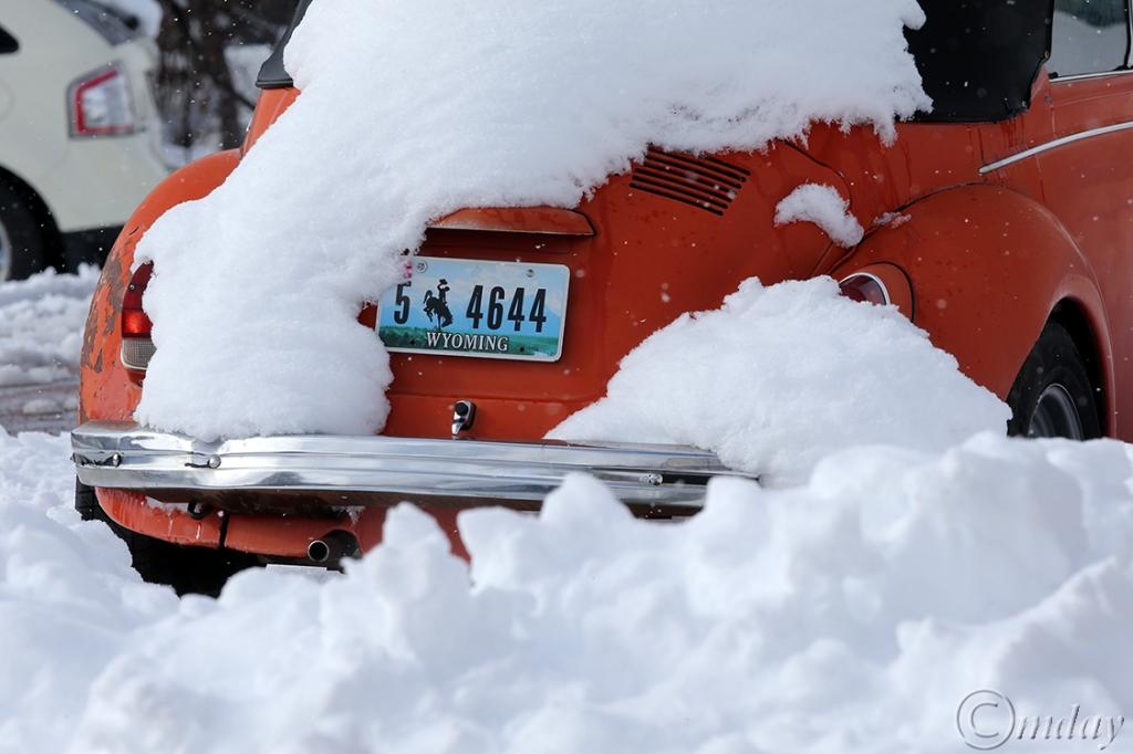 2.1DX6354Bug&SnowApr'16(7.5x5,150cpywrt)