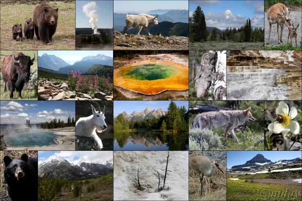 Majestic Collage1-20(7.5x5,300cpywrt)