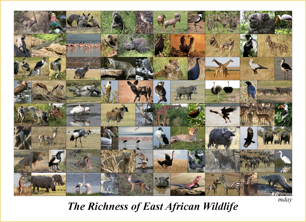 eastafricawilflifecollage7-5x5-4300labelbd
